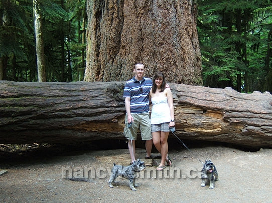 Photo of Cathedral Grove Visitors