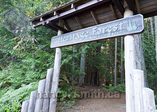 Photo of Welcome To The Heritage Forest